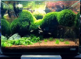 Nano Aquarium Design Hassle Free Aquariums For Sale Fish Ready Today