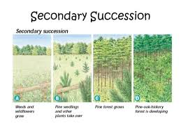 Primary And Secondary Succession Venn Diagram Primary And Secondary Succession Ecology 3 Successions Microbes And