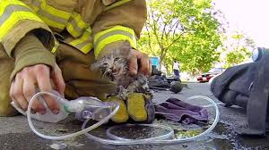 GoPro: Fireman Saves <b>Kitten</b> - YouTube