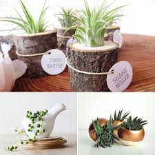 good desk plants in interior photo details these ideas we provide to show that the