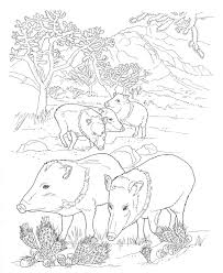 Small Picture Wild Hog Coloring SheetHogPrintable Coloring Pages Free Download
