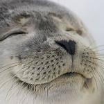 Satisfied Seal Meme Generator - Imgflip via Relatably.com
