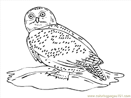 Small Picture Owl Coloring Page 20 Coloring Page Free Owl Coloring Pages
