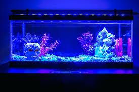 aquarium led lighting marine aquarium led lighting india