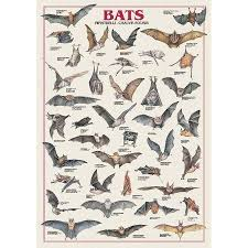 Bat Species Chart Home In 2019 Bat Animal Bat Species Animal Posters