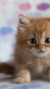 Cute Cat Wallpapers on WallpaperDog
