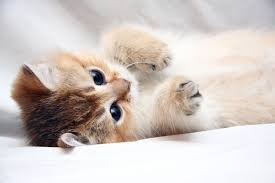 Image result for cute cats