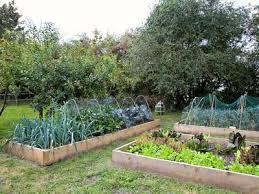 smart tips for low maintenance raised garden beds