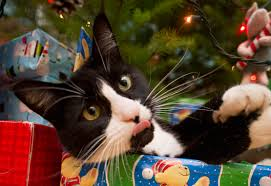 Image result for cats under the Christmas tree