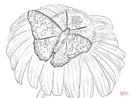 Small Picture Butterfly Among Flowers coloring page Free Printable Coloring Pages