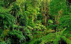 Landscape wallpaper, Jungle wallpaper ...