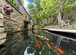 guide for your perfect koi pond in