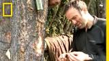 Image result for SURVIVING BY EATING TREE BARK