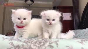 Chú mèo con ♥ Rửa mặt như mèo ♫♫♫ Nhạc thiếu nhi vui nhộn sôi động - YouTube