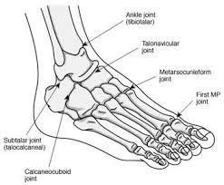 Ankle Bone Chart Pin On Emt