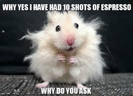 Afbeeldingsresultaat voor hamster coffee Meme