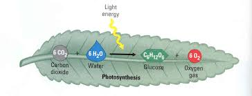 image result for equation for photosynthesis