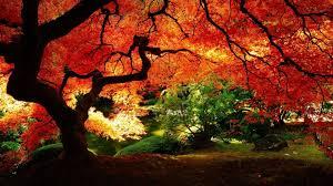 Autumn Zen Garden Wallpapers ...