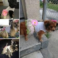 BY <b>Sunflower</b> Pet <b>Dog Dress</b> Summer <b>Pink</b> Princess <b>Flower</b> Baby ...