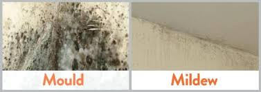 getting rid of mold in bathroom. How To Get Rid Of Mildew In The Bathroom Black Mold . Getting L