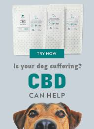 Dog Aspirin Dosage Chart Vetprofen For Dogs Side Effects Vetprofen Alternatives
