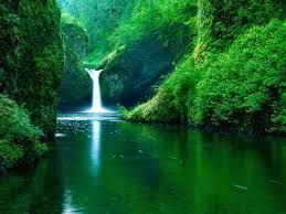 Desktop Wallpaper Green Nature