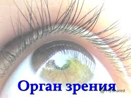презентация на тему заболевание глаз 8 класс