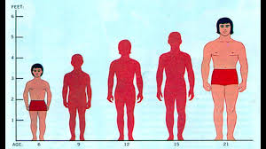 Human Weight Chart Male Height Weight Chart This Is What You Should Weight According