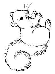 Squirrel Coloring Sheets Spikedsweetteacom