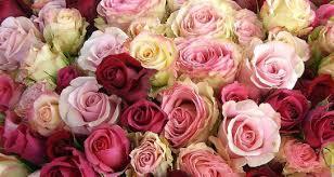 """Résultat de recherche d'images pour """"photos de rose"""""""