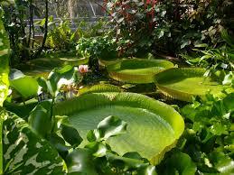 Matière : Botanique Images?q=tbn:ANd9GcRVPpi7AONRmJ1aV448G1eVvDCm3f8INBr9MCZws327_-Mx3W-C