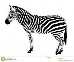 Isolated Zebra Silhouette Vector Black Stripes 9202408 Jpg 1300