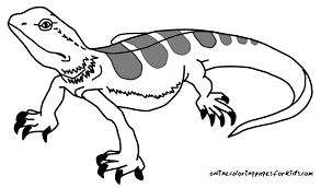 Small Picture Best Lizard Coloring Pages Best And Awesome Co 7288 Unknown
