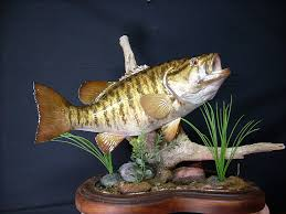 smallmouth bass taxidermy mounts