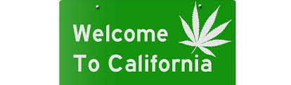 licence to grow 100 plants california
