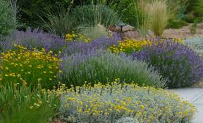 Wildflower Garden Design Fascinating My Favorite Plant Combinations High Country Gardens The High