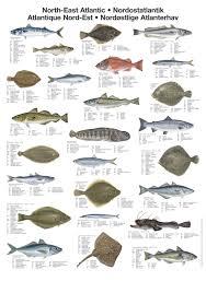 Saltwater Fish Chart North East Atlantic Fish Poster