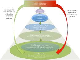 Species Diversity Definition Biodiversity In The Anthropocene Proceedings Of The Royal Society