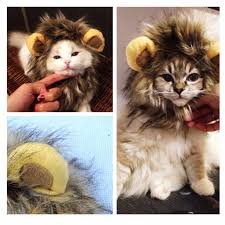 Fancy <b>Pet</b> Hat Costume Cute Lion <b>Mane Cat</b> Wig Halloween ...