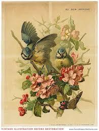 Vintage Illustrations Blending A Vintage Bird Illustration Into A Design French Kiss
