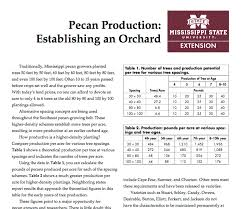 Pecan Production Establishing An Orchard Mississippi