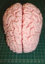 human brain by jmil