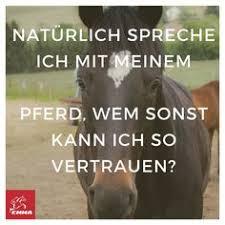 Die 31 Besten Bilder Von Reiter Sprüche In 2016 Pferde Zitate