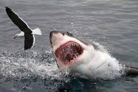 shark attack on humans. Modren Humans With Shark Attack On Humans