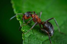5 effective ways to getting rid of ants