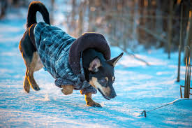 Itchy in Winter in Dogs - Definition, Cause, Solution, Prevention, Cost