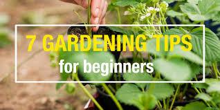 beginner gardening. 12/07/2016 7 Tips For Beginner Gardeners Gardening