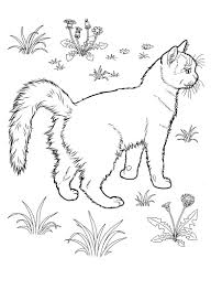 Cat Coloring Pages For Teens And