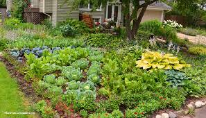 front yard garden ideas. Front Lawn Vegetable Garden Side View © Copyright Shawna Corona Yard Ideas O