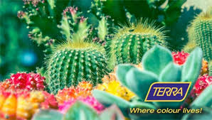 growing cacti with terra